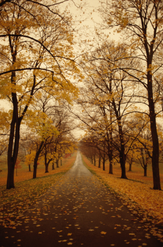 Road Between Autumn Trees