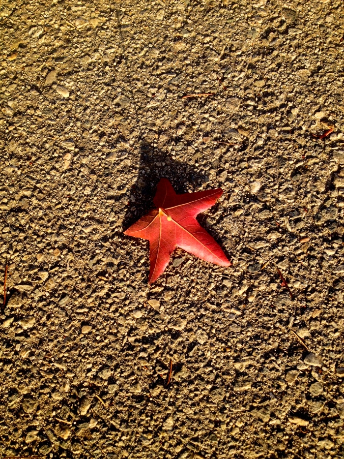 Starfish on Asphalt