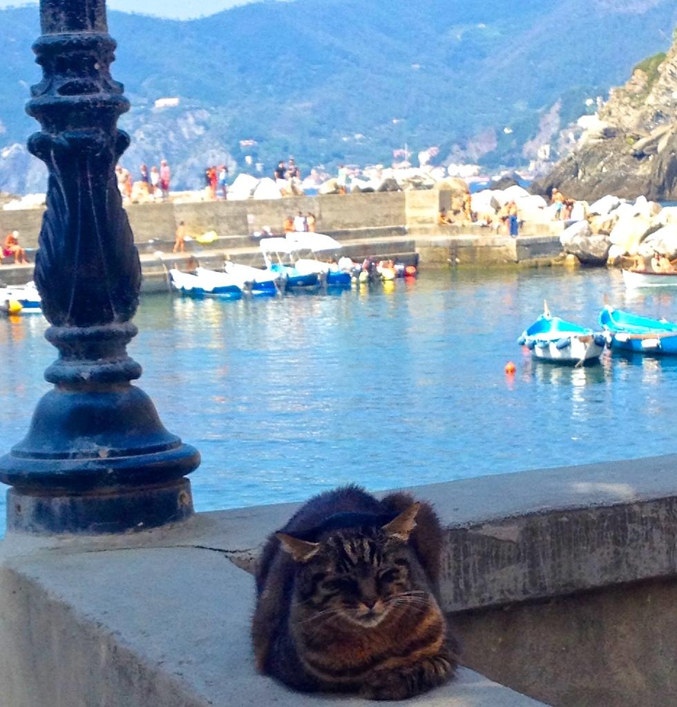 Gatti sunning in Monterosso, Cinque Terre, Italy