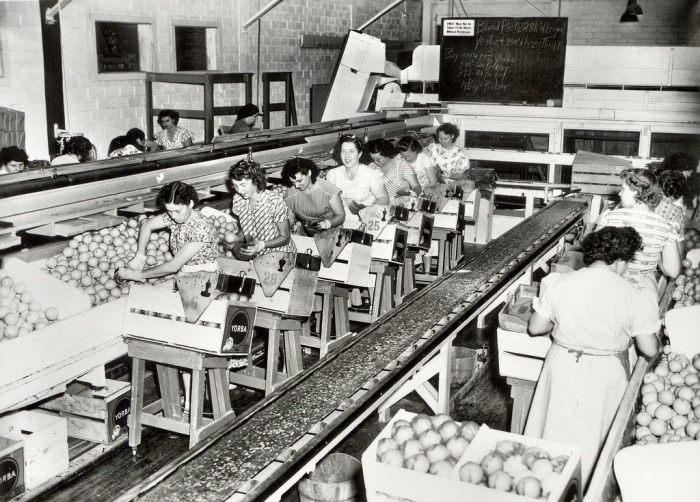 citrus packing house, 1940's