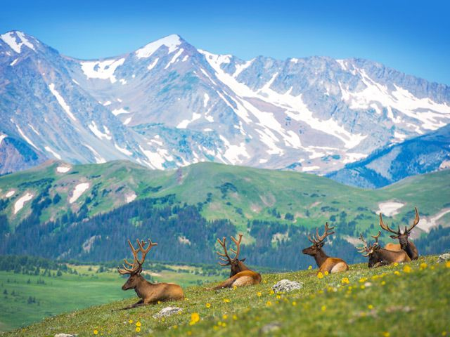 Elk Herd Rocky Mtn. National Park-creative commons photo